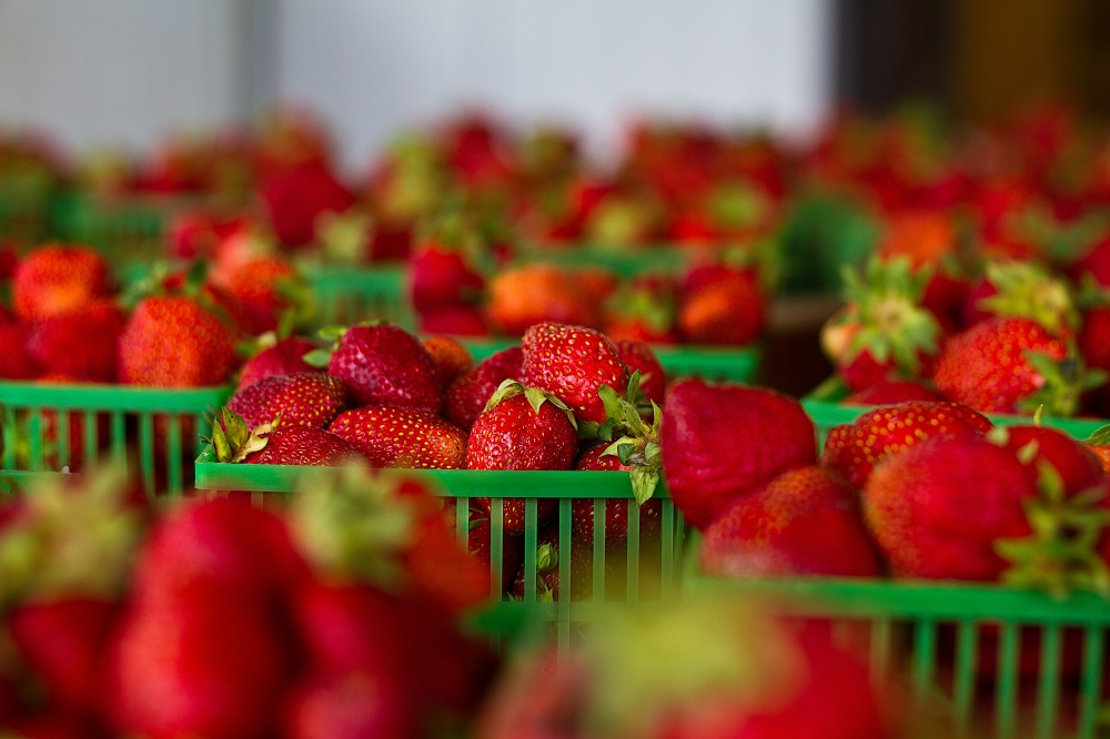 strawberries pesticides